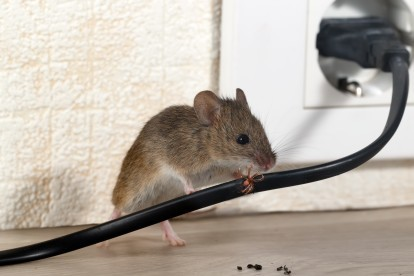 Pest Control in Tooting, SW17. Call Now! 020 8166 9746