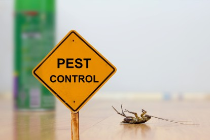 Pest Contol in Tooting, SW17. Call Now 020 8166 9746